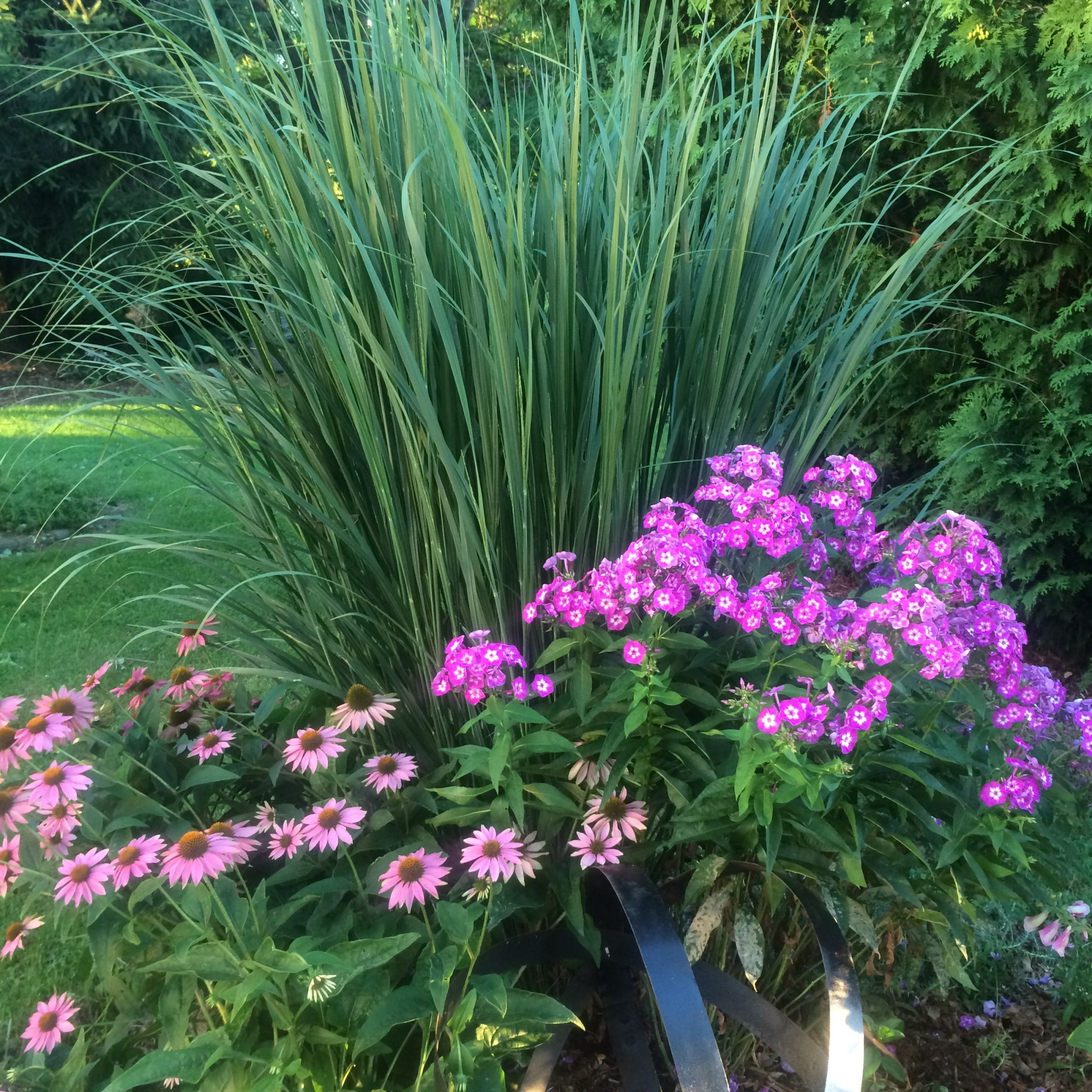 Ornamental grass for shade - Soft Arching Form Is Represented By Fountain Grass While Feather Reed Grass Is Upright And Cylindrical Some Grasses Are Shade Tolerant Like The Golden