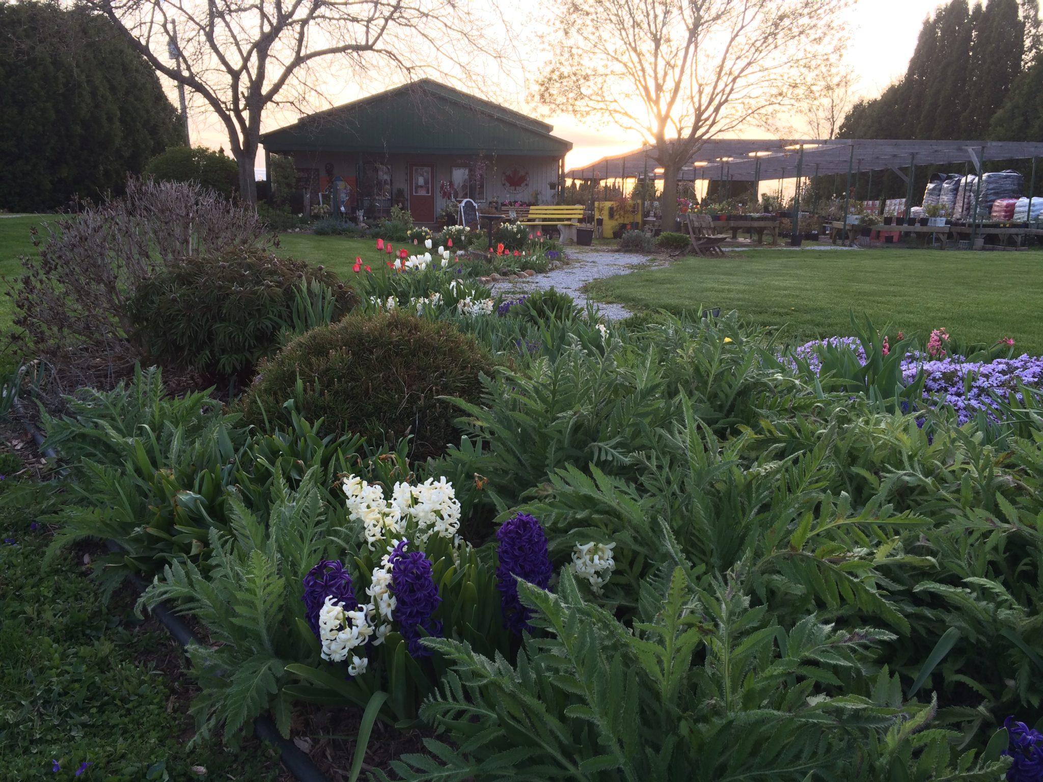 Bulbs Kentwood Gardens